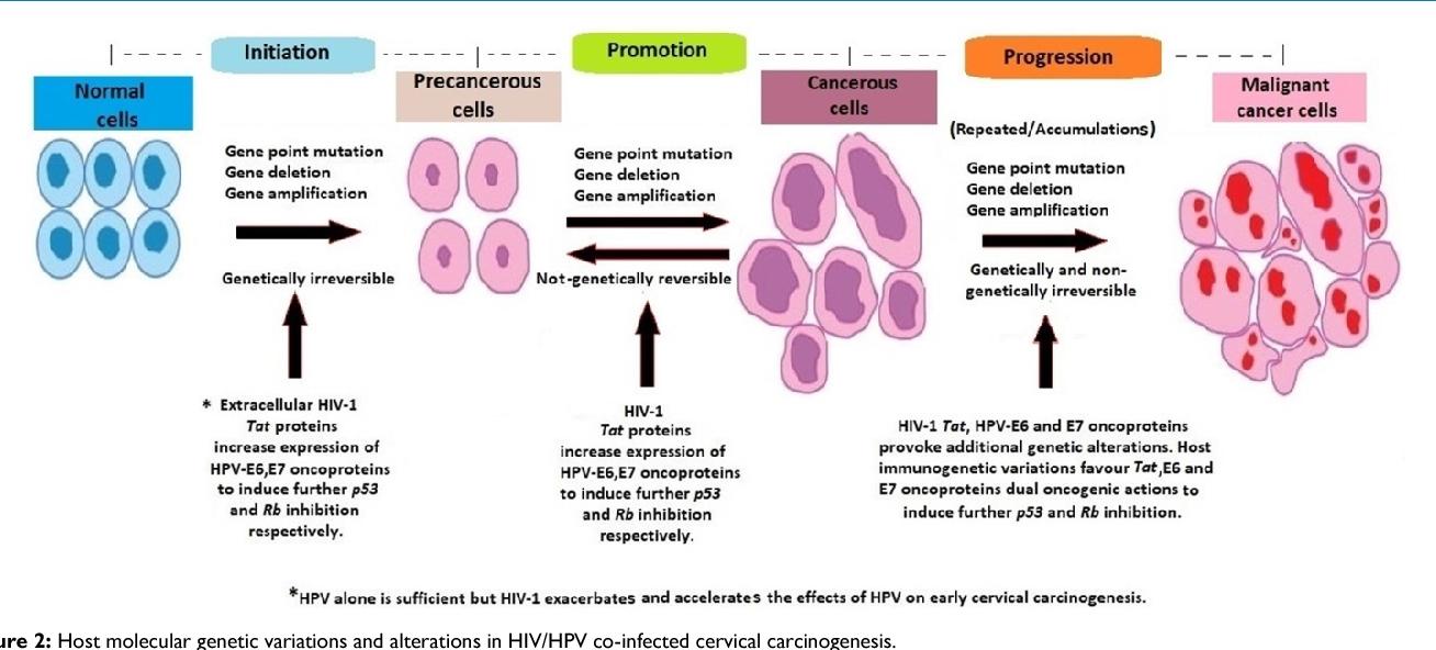 Predispozitia ereditara pentru cancerul de san, ovar si endometru