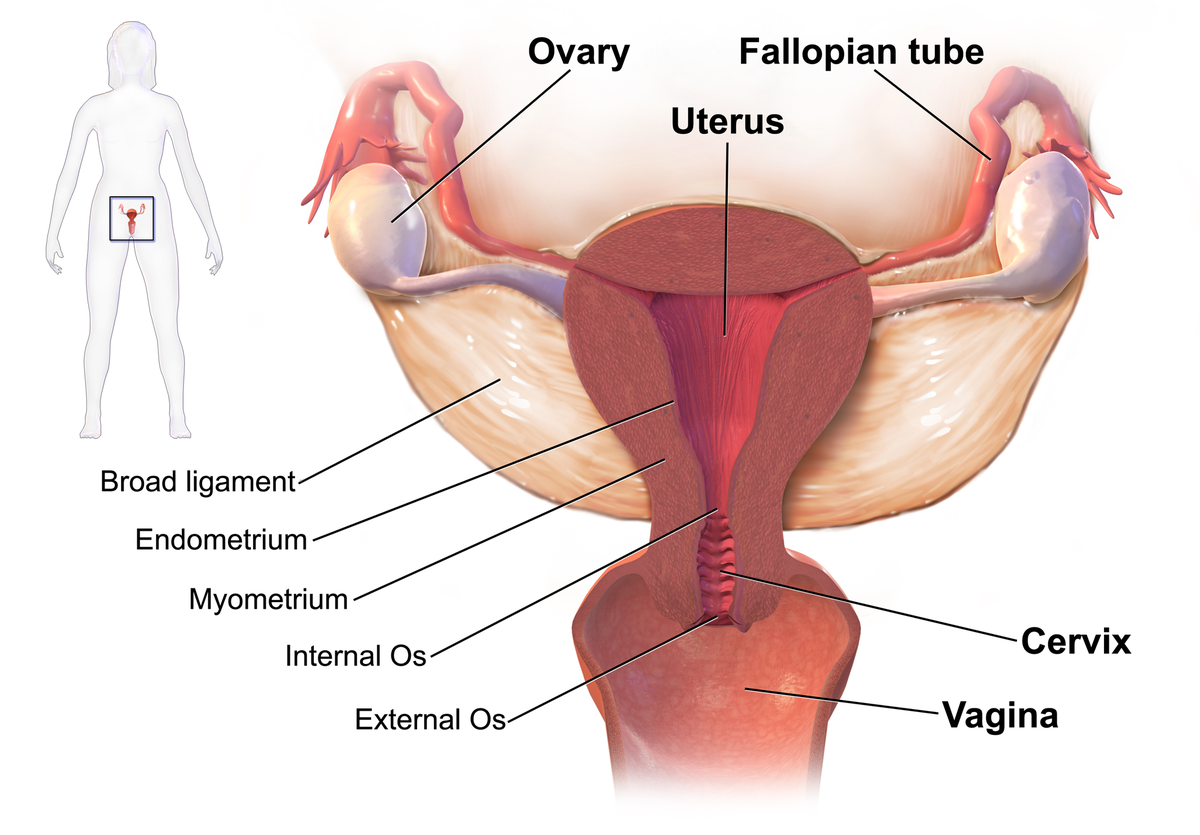 hpv virus and fibroids