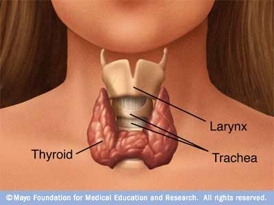 papillary thyroid cancer vocal cords