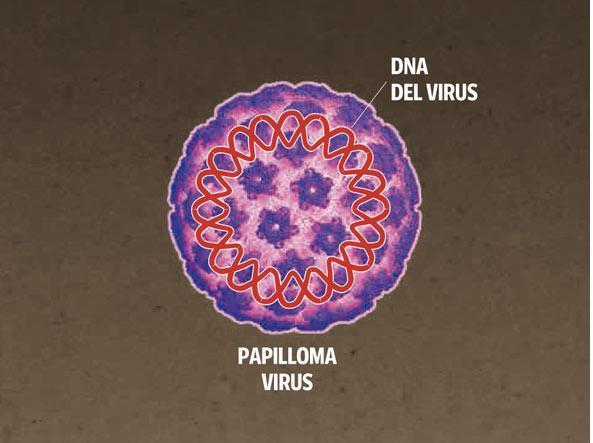 papilloma virus e mortale