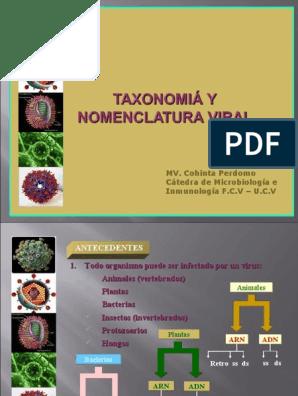 papillomaviridae taxonomia