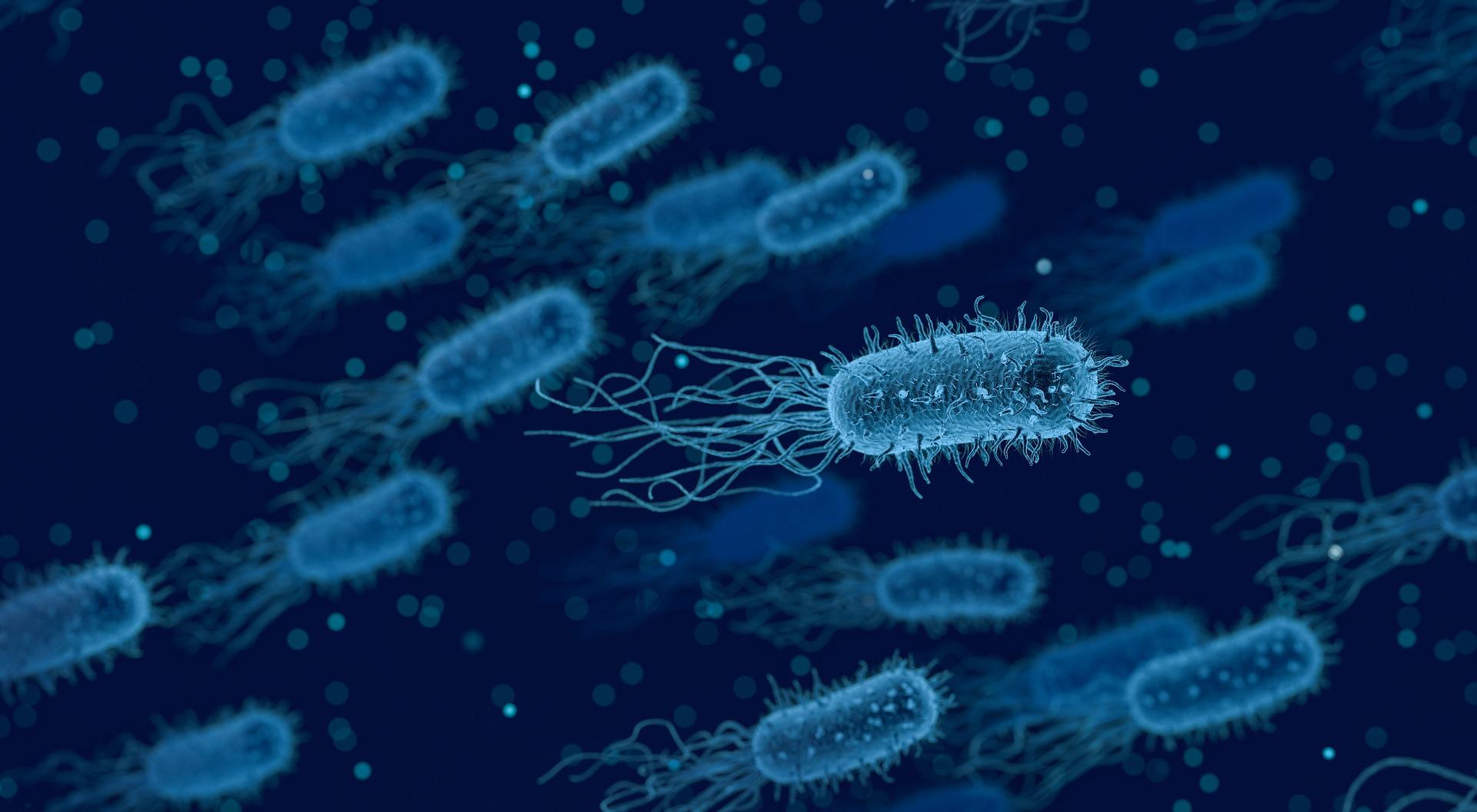 paraziti zdravljenje)