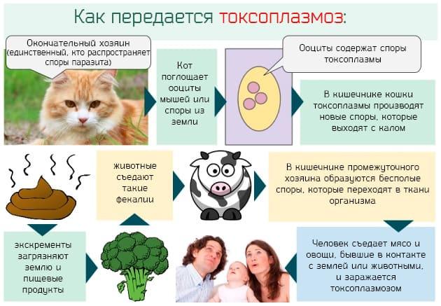 toxoplasma gondii igg pozitiv)
